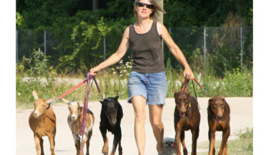 Image of Dr. Lynne Swanson walking dogs and goats.
